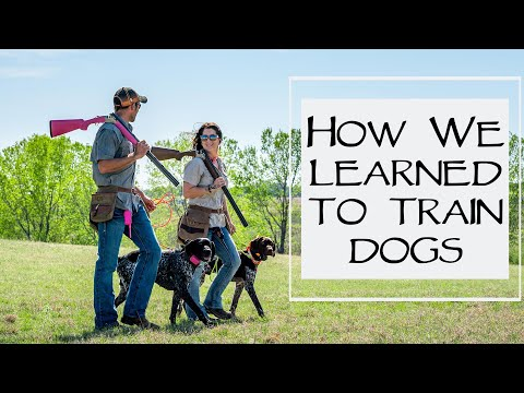 Puppy Prices & How We Learned To Train Dogs  You Ask We Answer Episode 17: Part 3