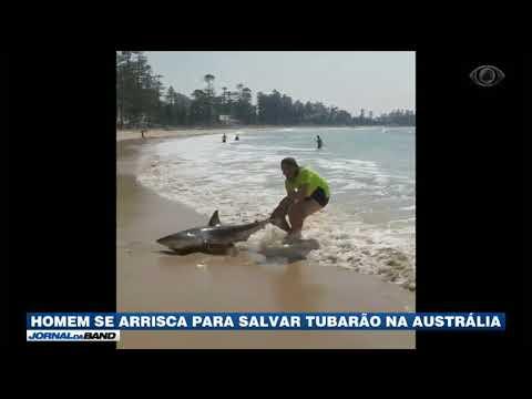 Homem Se Arrisca Para Salvar Tubarão Na Austrália
