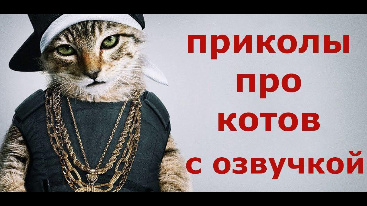 ПРИКОЛЫ ПРО КОТОВ С ОЗВУЧКОЙ. Коты 2020. Смешные коты.