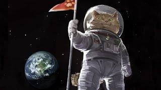 Почему коты не летают в космос. Кот Феликс.  Секретные материалы