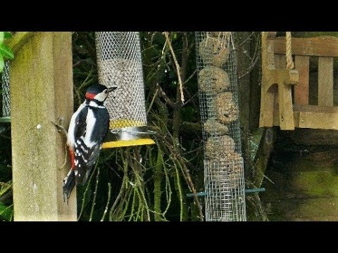 How To Get Lots Of Birds On Your Bird Feeder