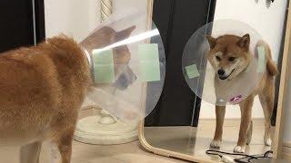 柴犬ゆき の インスタグラム https://www.instagram.com/_yuki_shiba_in...