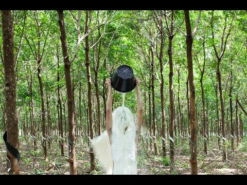 APT8 | The 8th Asia Pacific Triennial of Contemporary Art