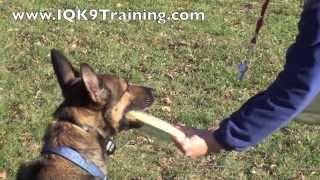 "Iq K9 Training | Frisbee Dog Tricks While ""placing"" On A Frisbee 