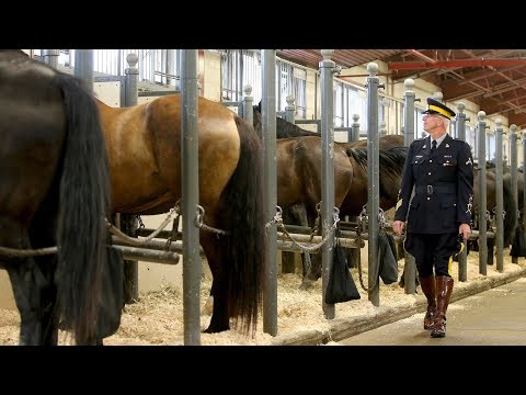 Musical Ride-bred horses slated for largest-ever RCMP Foundation auction