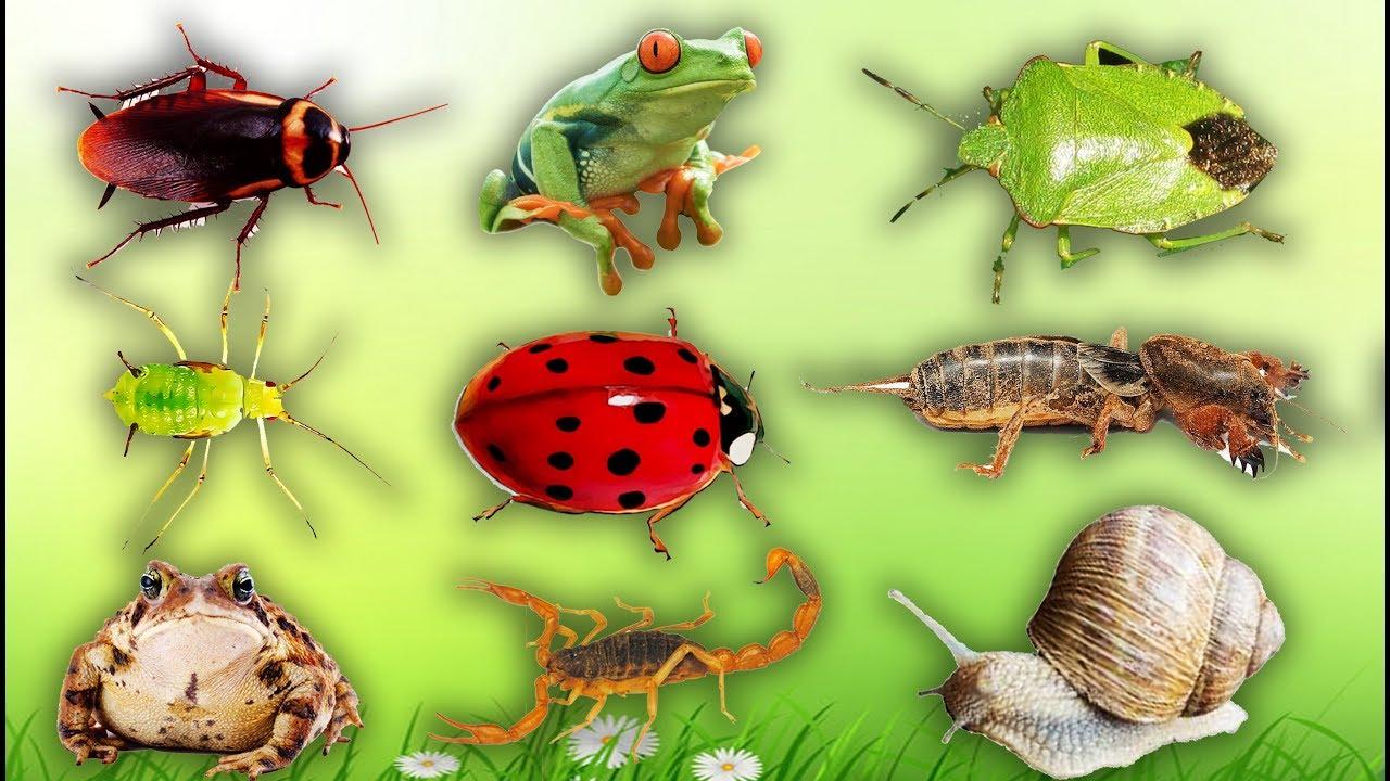 image Con gì đây | Dạy bé học côn trùng #2 | Learn About Insects