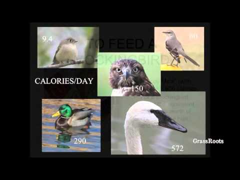 The Hungry Bird: What Birds Eat