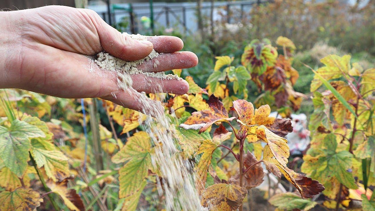 Замена всех удобрений огорода осенью! Годится под любые культуры.  Без смешивания и расчётов АММОФОС