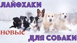 Лайфхаки для собаки ♡ Nika Life
