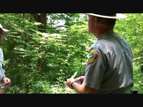 2 Bracken Fern and life cycle.wmv