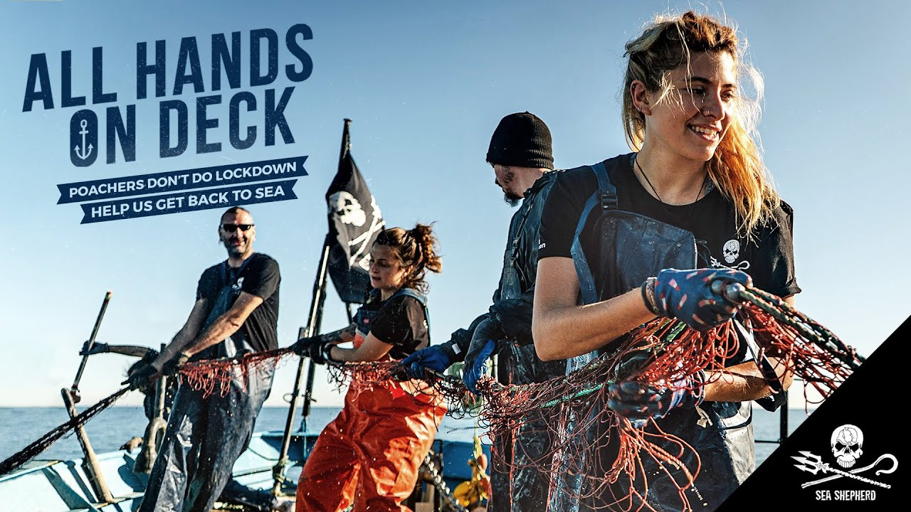 Send Sea Shepherd Back to the Frontlines