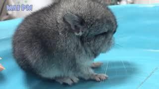 Cute Baby Animals Funny Animal Videos @@