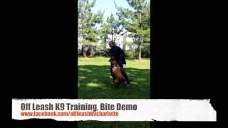 Bite Demonstration At Off Leash K9 Training