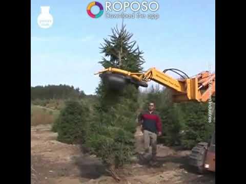 Tree cutting videos tree cutting videos Jat katne ki videos by machine  roposo Yaad Karne ki machine