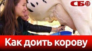 Мастер-класс – столичная девушка впервые доит корову – это стоит посмотреть