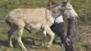 Repeat youtube video raped by donkey