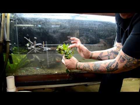 75g Dwarf Cichlid Tank- REBOOT/Rescape for better breeding behavior