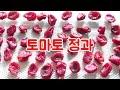 방울 토마토 정과 만들기 / ミニトマトのコンフィ  / tomato confit