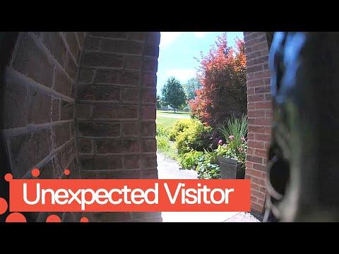Bill Reed - WATCH! Doorbell Cam Captures Slithery Visitor At Front Door!