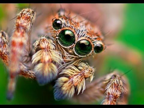Animal Eyes - Professor William Ayliffe