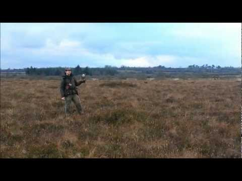 Falconry, Snipe hawking in Ireland