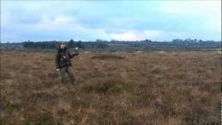 Falconry, Snipe hawking in Ireland