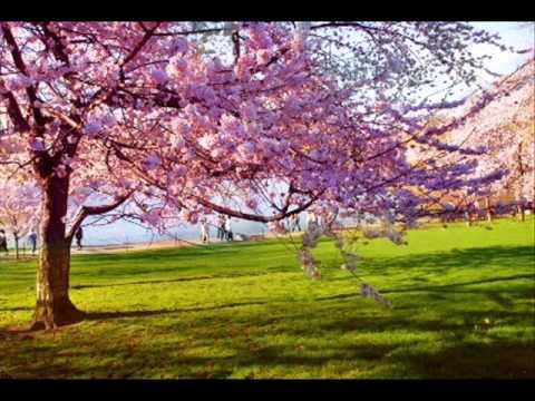 Vivaldi - Spring Ringtone!