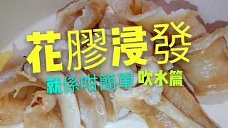 〈 職人吹水〉 花膠浸 發 吹水篇How to prepare Fish Maw 中英文字幕
