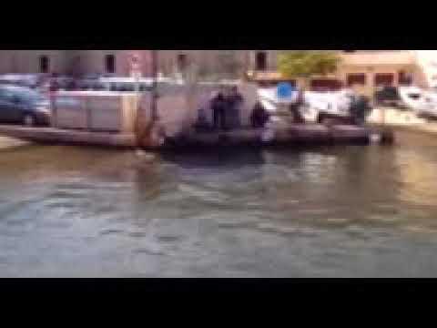 Marseille : une baleine dans le Vieux-Port !
