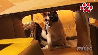 手作りのダンボルトンネルで遊ばなかった猫達 Mi-ke and Kuro