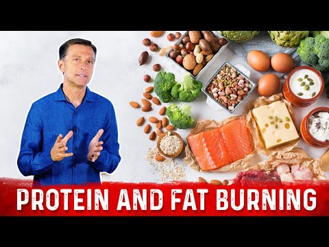 protein-and-fat-burning