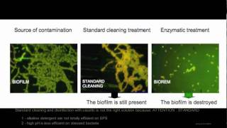 Destruction of Biofilm  - Realzyme: Enzymes for Life!