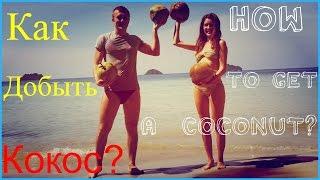Как добыть достать сорвать кокос? How to get a coconut?