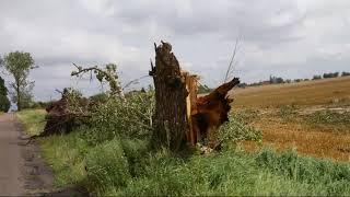 3 drzewa złamane po nawałnicy 11 sierpnia 2017