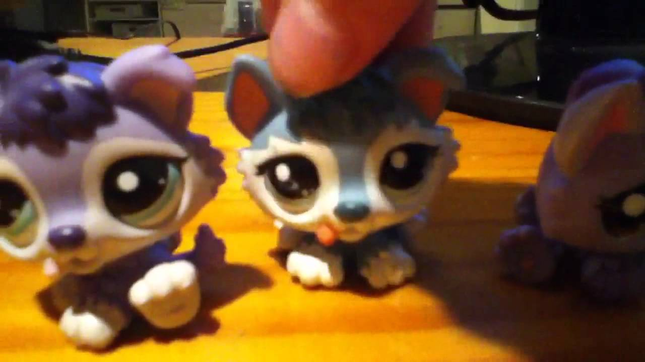 All My Lps Husky Puppies Youtube