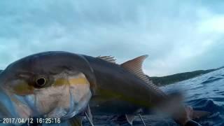 Faysal jaro spearfishing