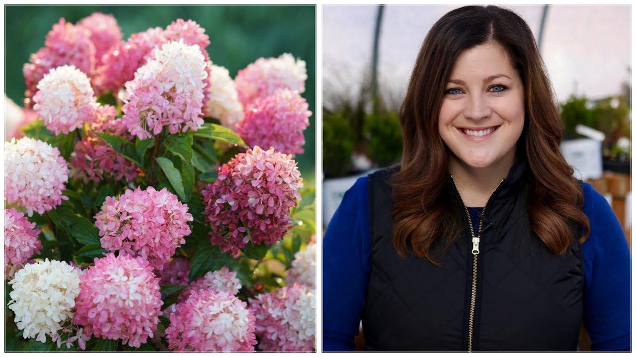 Download 16 Hardy Hydrangea Varieties 🌿💜// Garden Answer