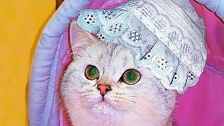 Приколы с детьми и котами Смешные дети и кошки Смешные коты и кошки 2017 🐈 КОТИК СИМКА Magic catsА
