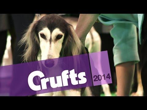 Best of Breed | Saluki | Crufts 2014