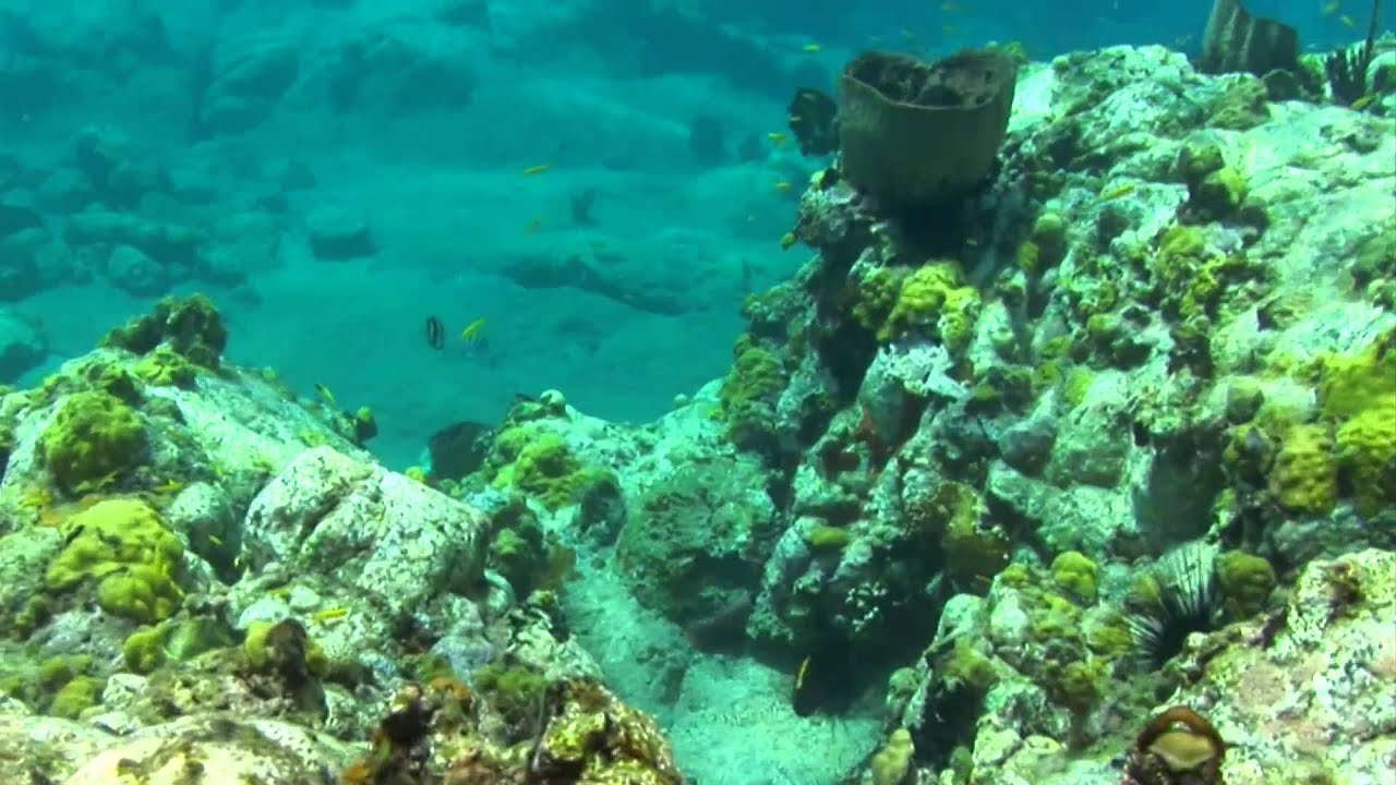 Snorkeling the Reef at Petit Nevis, Grenadines, Caribbean