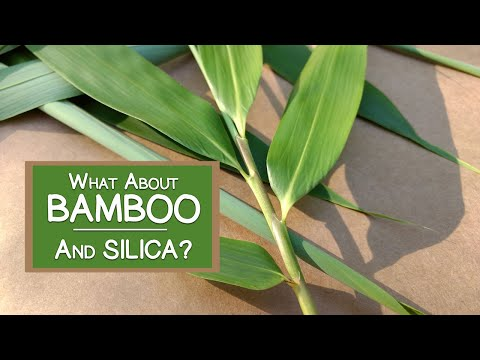 What About Bamboo? Is It a Good Source of Silica?