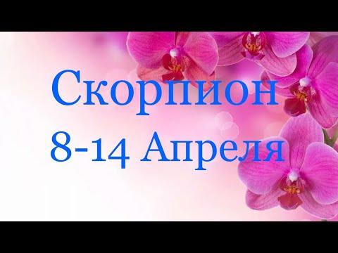 Скорпион. Таро-прогноз с 8-14 Апреля 2019 года ❤️