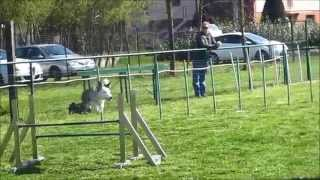 Aac National Dog Agility Team Off Site Practice 2015