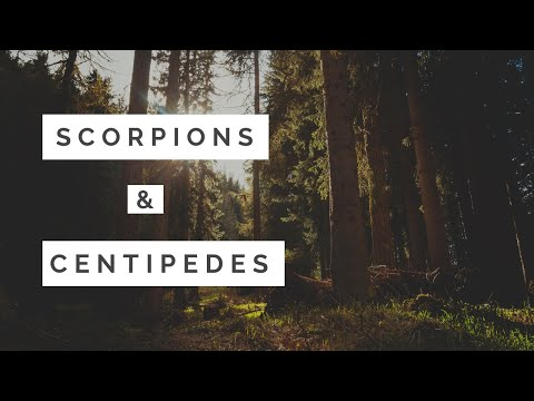 Scorpions and Centipedes in Payson AZ - how we treat them at Friendly Pest Control