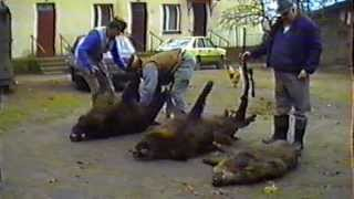 trofea myśliwskie  Cerkwica gudzień 1990r