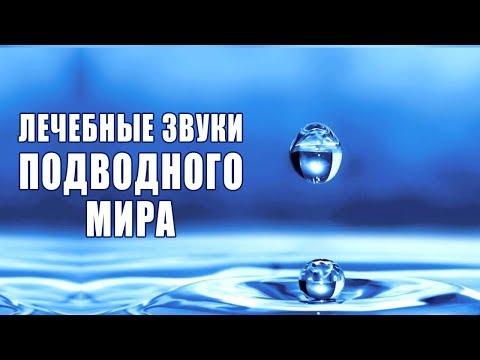 Медитация Лечебные Звуки Подводного Мира ❯ Улучшение Общего Состояния ❯ Снятие Стресса ❯ Звуки Воды
