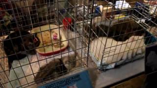 Выставка кошек в Харькове 28.11.2009 ХАТОБ ч.2