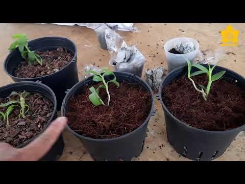 5CTHO 5CTPT GIEO HAT Vườn lan BÁ NINH | Chia sẻ của NGUYỄN NGỌC HÀ
