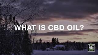 What is CBD Explore the world of CBD Oil Explainer video