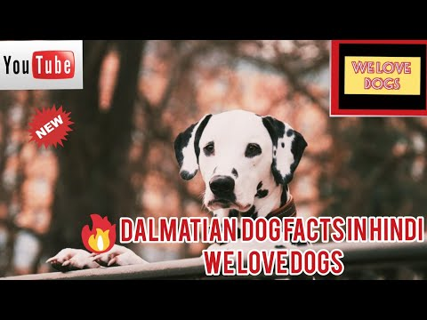 DALMATIAN DOG FACTS IN HINDI || WE LOVE DOGS